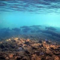 cobble fish water surface blue creek